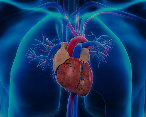 Cardiovascular - Nano Therapeutics Pvt. Ltd. - Heart Stent Manufacturing Company Surat, India